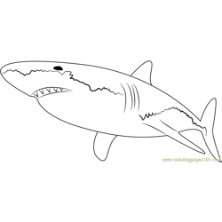 White Shark Free Coloring Page for Kids