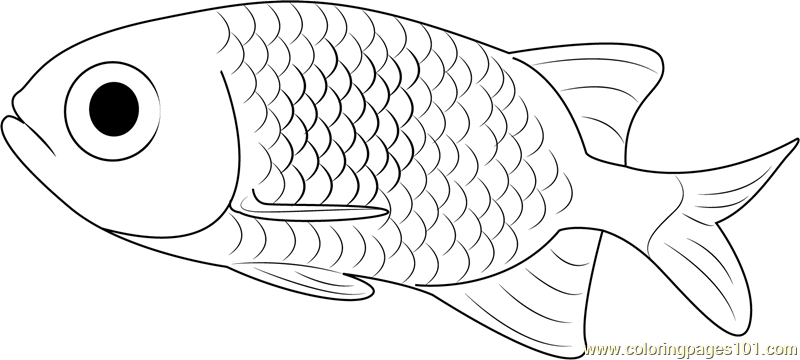 Small Fish Coloring Pages Page Free Other