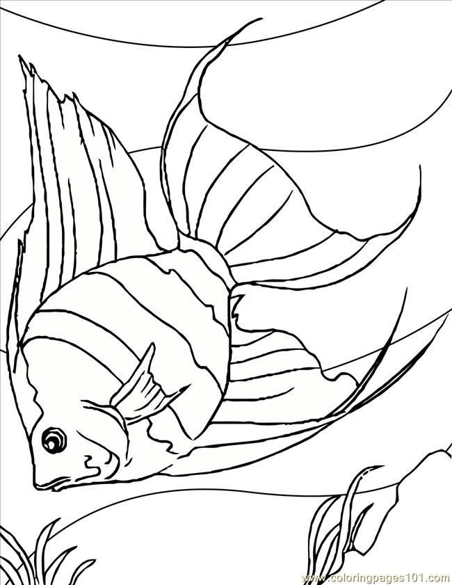 Angelfish Ink Coloring Page