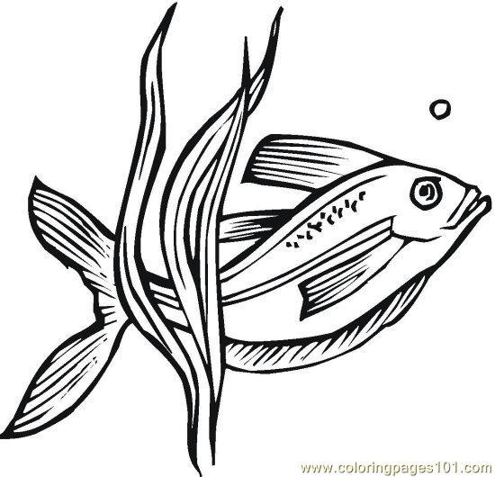 Fish (13) Coloring Page