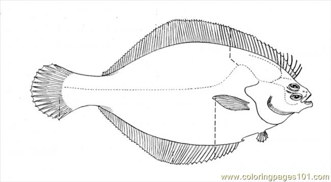 Flounder 1 Coloring Page Free Other Fish Coloring Pages Flounder Coloring Pages