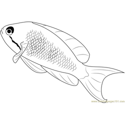 Lyretail Anthias Fish Free Coloring Page for Kids