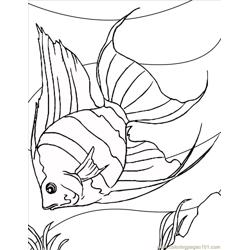 Angelfish Ink