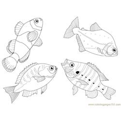 4 fishes different views