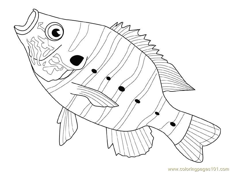 trigger fish coloring pages - photo#11