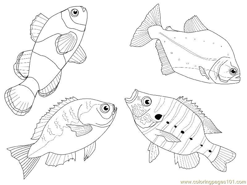 4 fishes different views Coloring Page