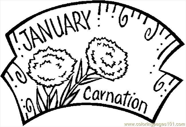 01 January Carnation 2 Coloring Page Free Flowers Coloring Pages