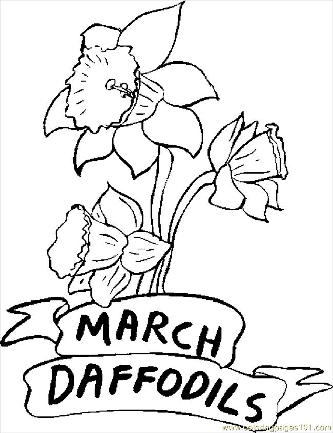 03 March   Daffodils Coloring Page