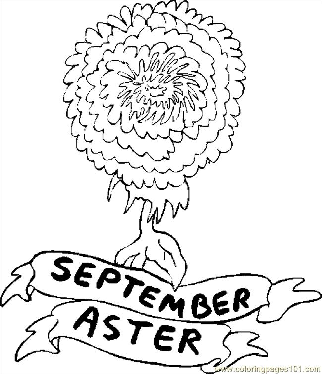 09 September Aster 1 Coloring Page Free Flowers Coloring Pages Coloringpages101 Com