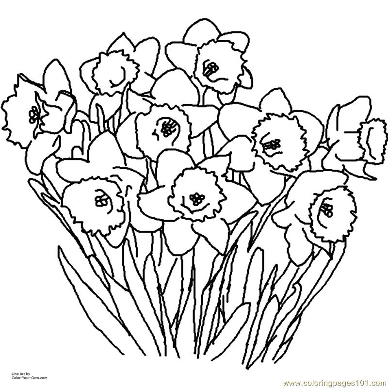 Daffodil Coloring Page Free Flowers Coloring Pages