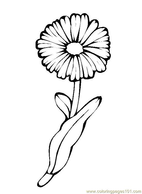 Flower Picture 4 Coloring Page Free Flowers Coloring Pages