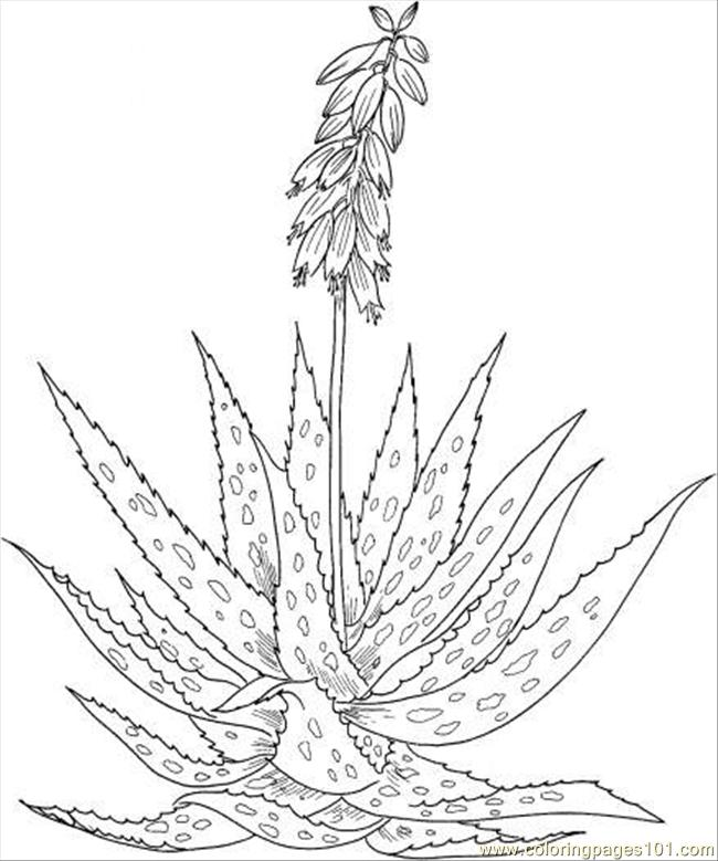 Aloe 4 Coloring Page Free Flowers Coloring Pages