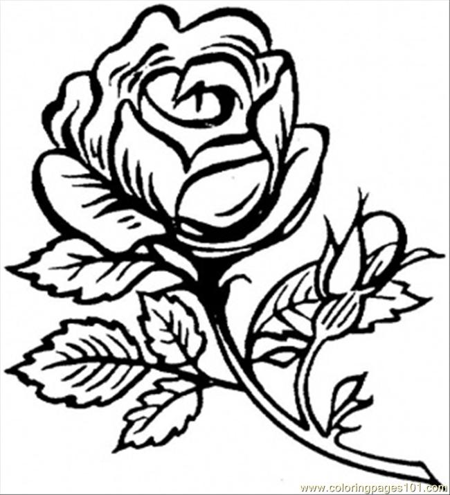 Beautiful Big Rose Coloring Page - Free Flowers Coloring Pages ...