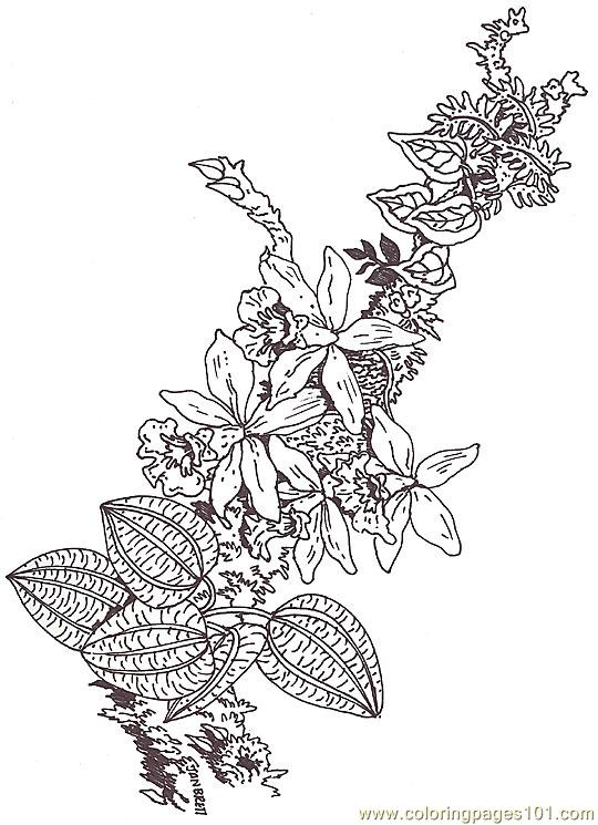Coloring Orchid Branch Segment Coloring Page