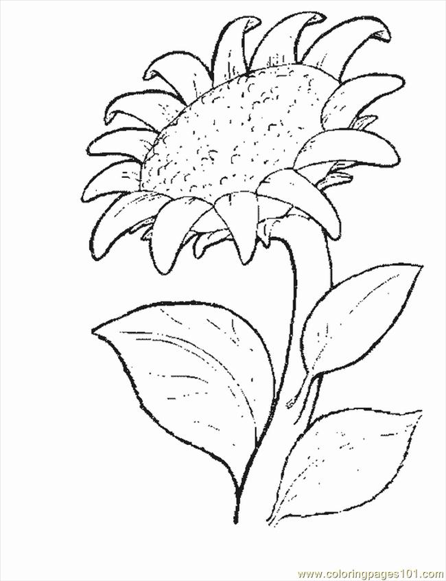 Flower6 Coloring Page