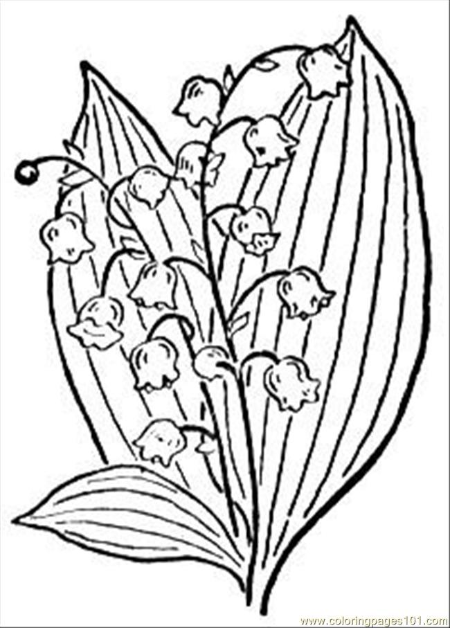Lily Of The Valley 2 Coloring Page