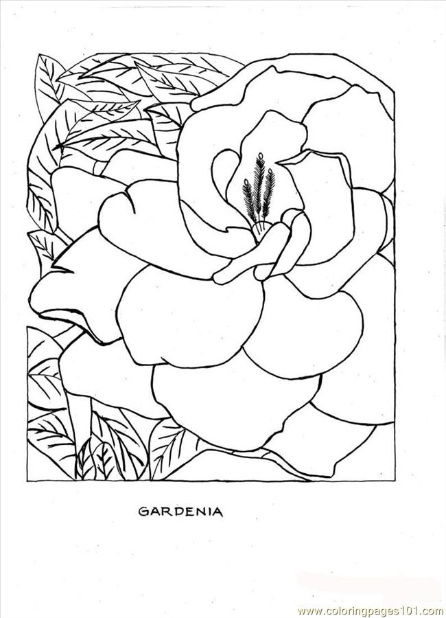 R Coloring Page Gardenia Full Coloring Page