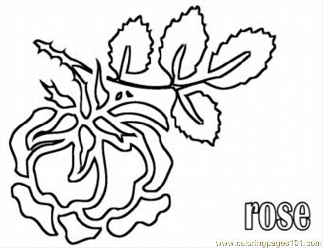 Rose 6 Med Coloring Page