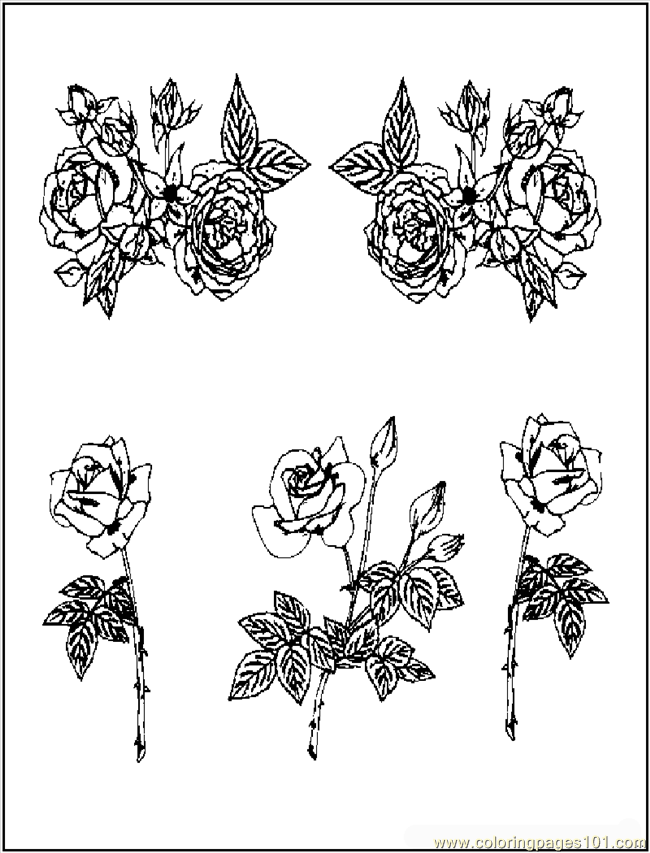 Rosesgalore Coloring Page