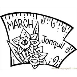 03 March   Jonquil 1
