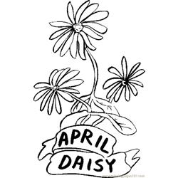 04 April   Daisy