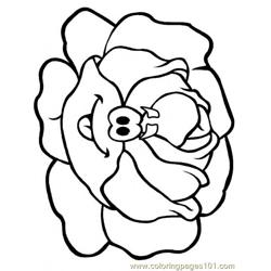 Lettuce Free Coloring Page for Kids