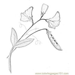Flower (6) coloring page