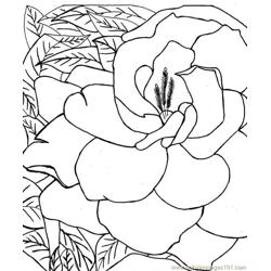 Flower Picture (2) Free Coloring Page for Kids