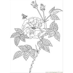 Bee On A Flower Coloring Page Free Coloring Page for Kids