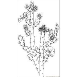 Cactus 7 Coloring Page