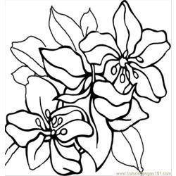 Flower Coloring Pictures 6
