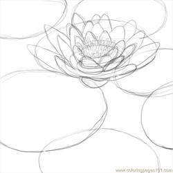 How To Draw A Lily Pad 5 Free Coloring Page for Kids