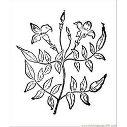 Jasmine 2 coloring page