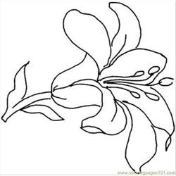 Lily 15 Coloring Page Free Coloring Page for Kids