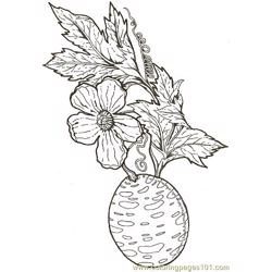 Wild Cucumber Blossom Free Coloring Page for Kids