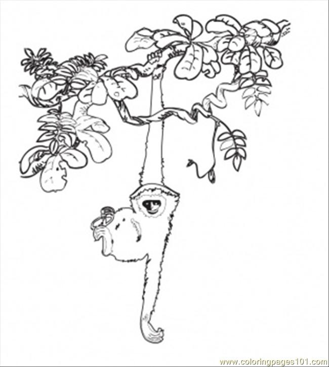 In The Rainforest Coloring Page