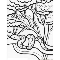 Rainforest%2b2 Free Coloring Page for Kids