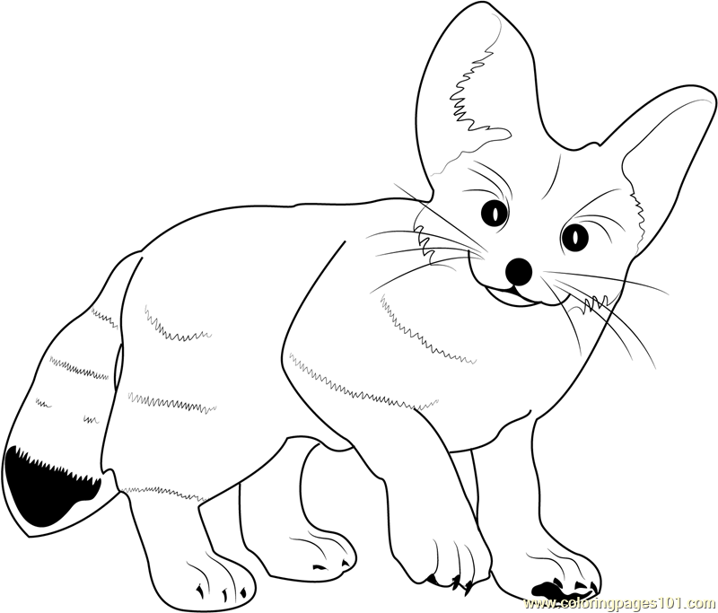 Fennec Fox Coloring Page Free