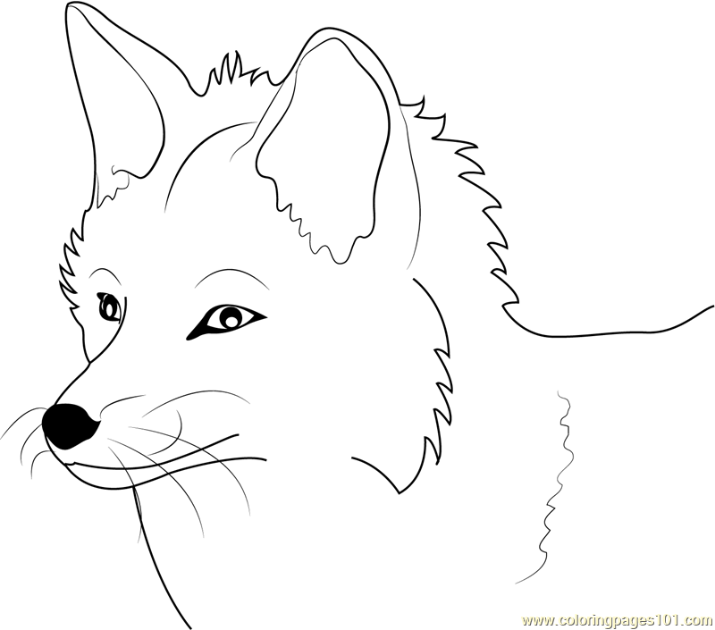 Fox Face Coloring Page Free Fox