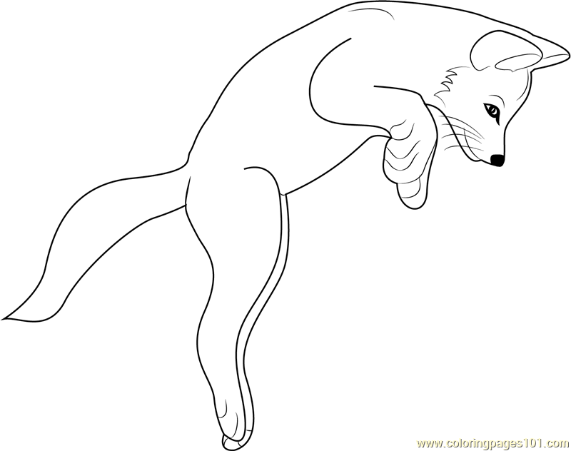 how to draw baby fox