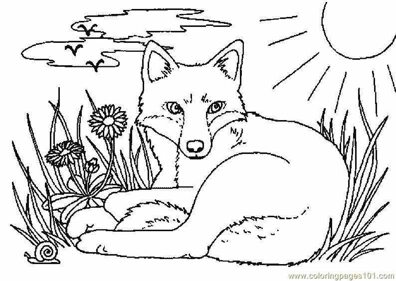 fox coloring pages free printable - photo#10