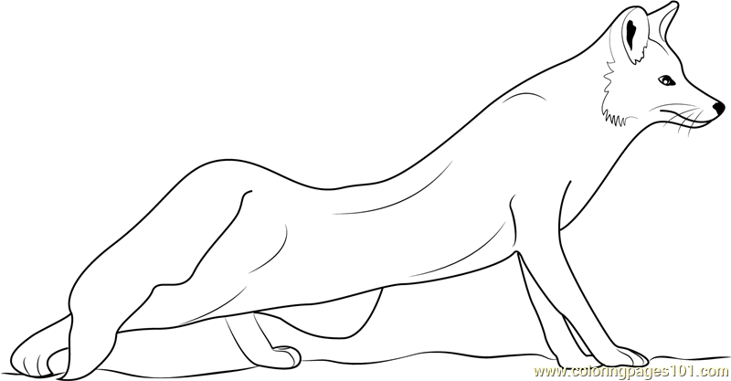 The Red Fox Coloring Page Free