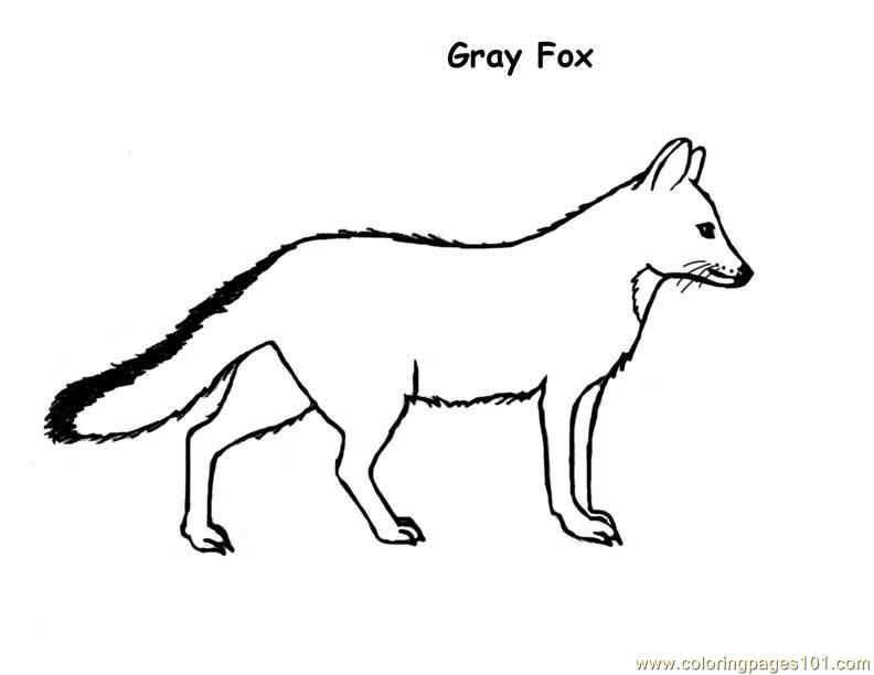 Fox gray Coloring Page