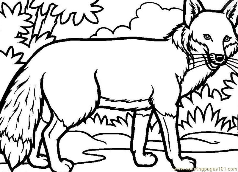 Fox walking looking Coloring Page