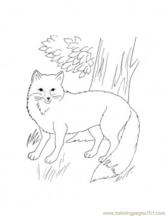 Fox Front Coloring Page Free Fox Coloring Pages Coloringpages101 Com