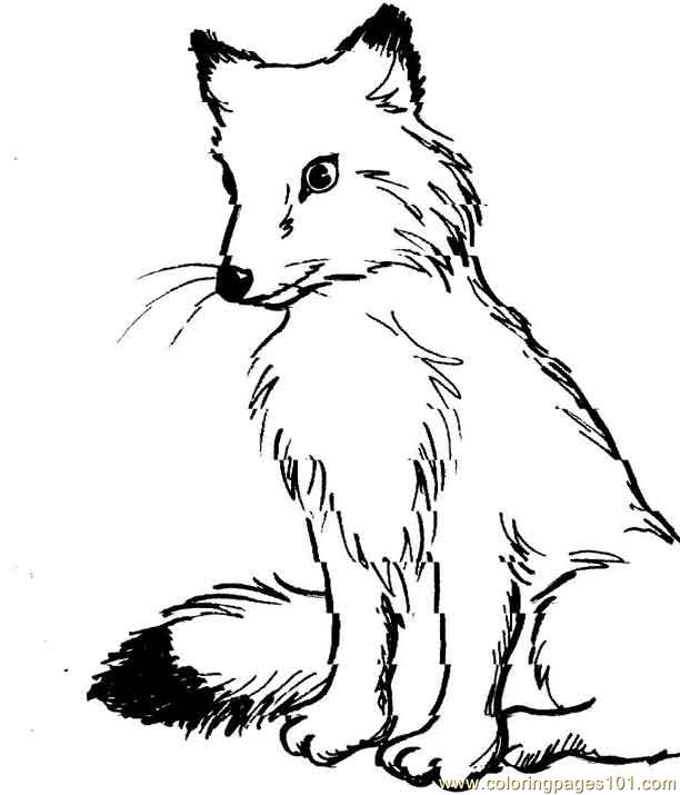 Fox looking down Coloring Page