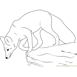 Fox Jumps on Rock Free Coloring Page for Kids
