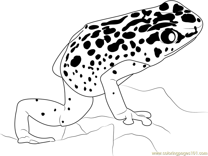 Blue Poison Dart Frog Coloring Page