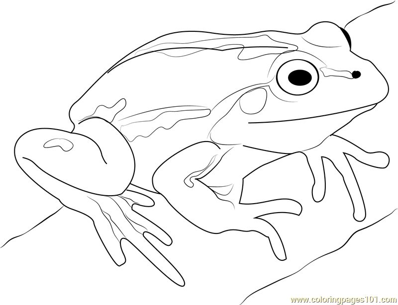 Cute Frog Coloring Page Free Frog Coloring Pages