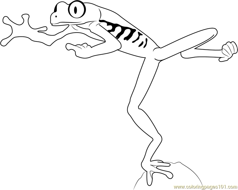 Red Eyed Tree Frog Jumping Coloring Page